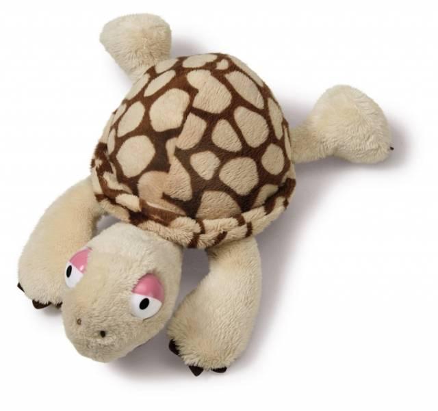 Nici Schildkröte liegend